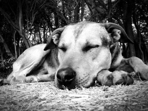 森の中で気持ちよく寝ている犬